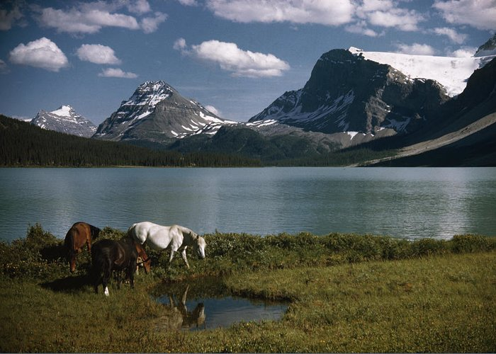 Outdoors Greeting Card featuring the photograph Horses Graze In A Lakeside Meadow by Walter Meayers Edwards