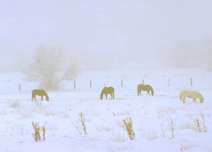 Fog; Mist; Foggy; Misty; Landscapes; Scenery; Scenic; Atmospheric; Snow; Snowy; Winter; Wintry; Cold; Seasons; Seasonal; Weather; Horses; Animals; Farming; Agricultural; Farms; Rural; Country; Farm Animals; Grazing; Grazing Horses; Field; Four Greeting Card featuring the photograph Horses Grazing In A Field Of Snow And Fog by Steve Ohlsen
