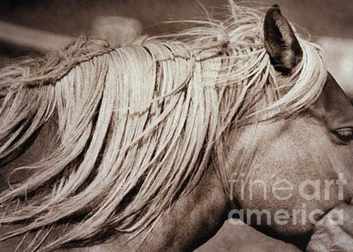 Horse Greeting Card featuring the photograph Horse's Mane by Michael Ziegler