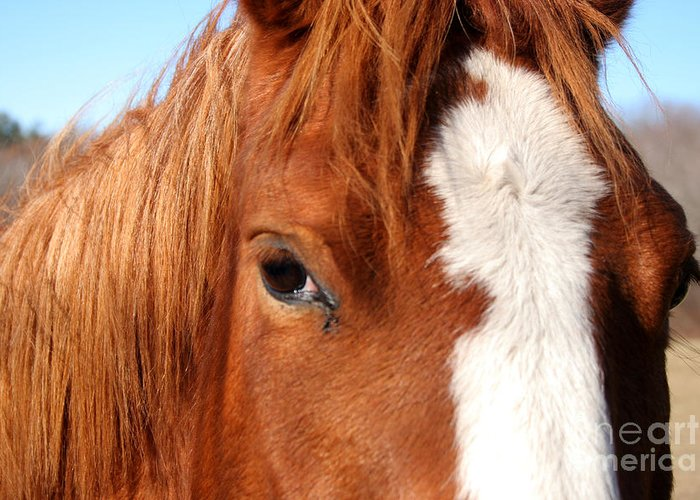 Horse Greeting Card featuring the photograph Horse's Mane by Thomas Marchessault