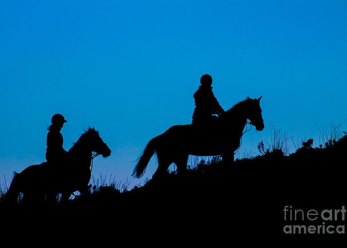Greeting Card featuring the photograph Horses On The Mountain by Marc Daly