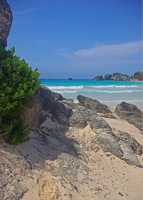 Bermuda Greeting Card featuring the photograph Horseshoe Beach And Sea Grass by Rich Walter