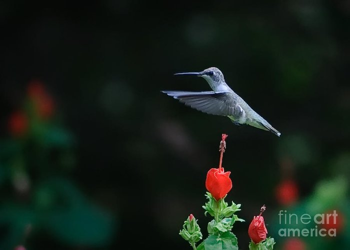 Hover Greeting Card featuring the photograph Hover by Charles Dobbs