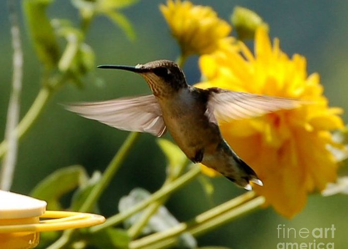 Diane Berry Greeting Card featuring the photograph Hummer by Diane E Berry