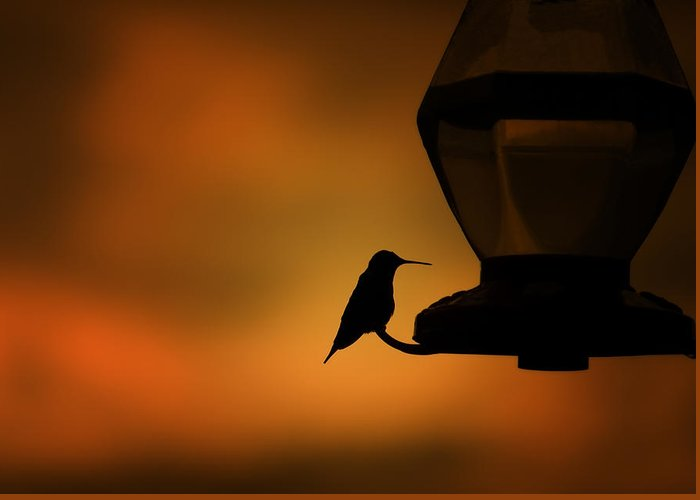 Hummingbird Greeting Card featuring the photograph Hummingbird After The Storm by Al Mueller