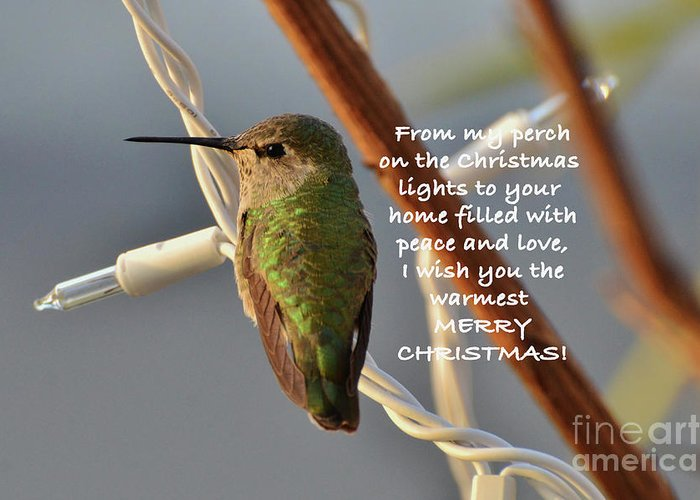 Christmas Wished Greeting Card featuring the photograph Hummingbird Christmas Card by Debby Pueschel