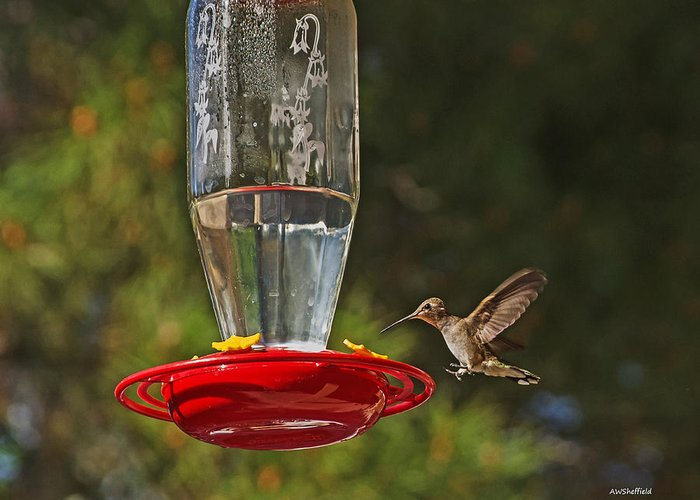 Hummingbird Greeting Card featuring the photograph Hummingbird Coming For Dinner by Allen Sheffield