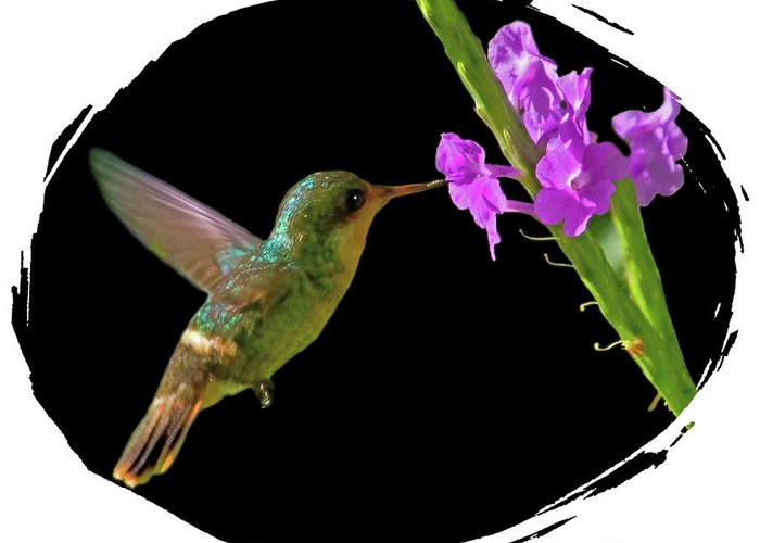 Tufted Coquette Greeting Card featuring the digital art Hummingbird by Larry Linton