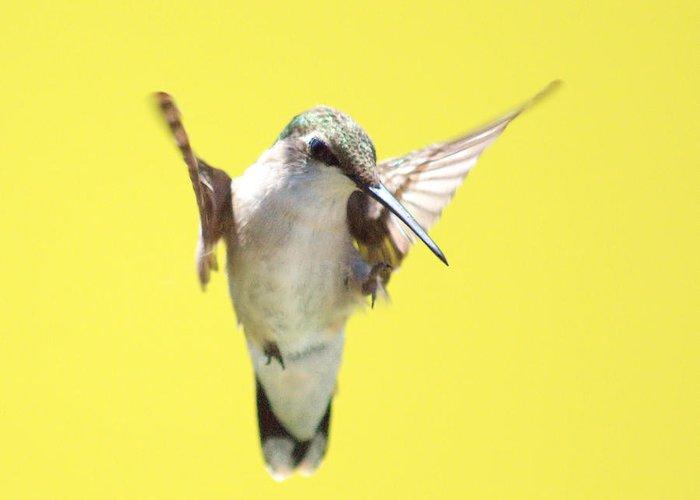 Hummingbird Greeting Card featuring the photograph Hummingbird On Yellow 2 by Robert Suits Jr
