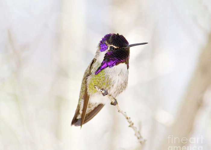 Hummingbird Greeting Card featuring the photograph Hummingbird by Rebecca Margraf