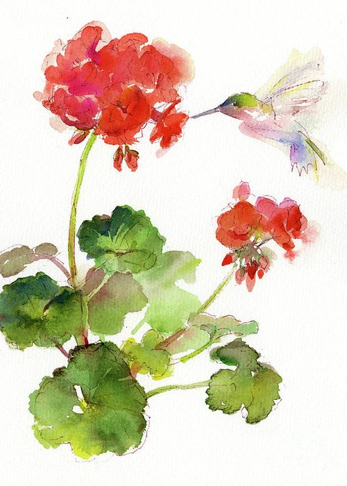Red Geraniums Greeting Cards