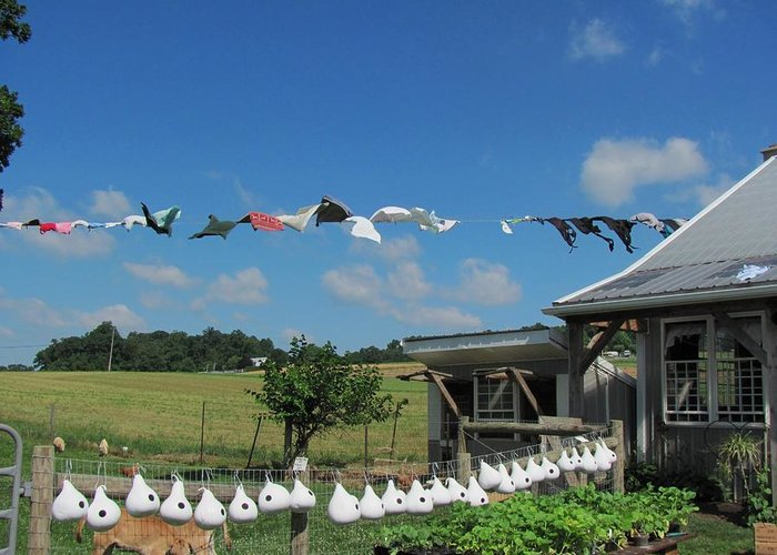 Amish Photographs Greeting Card featuring the photograph Hung Out To Dry by Renee Holder