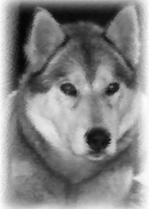 Active Greeting Card featuring the drawing Husky by Lisa Hebert