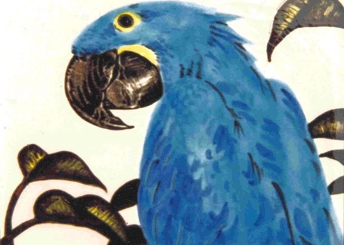 Hyacinth Macaw Greeting Card featuring the painting Hyacinth Macaw by Dy Witt