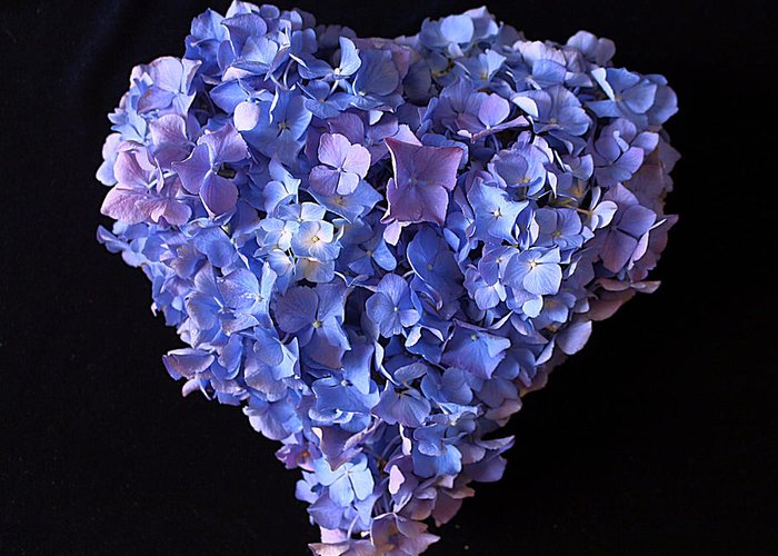 Hydrangea Greeting Card featuring the photograph Hydrangea Heart by Vicky Adams
