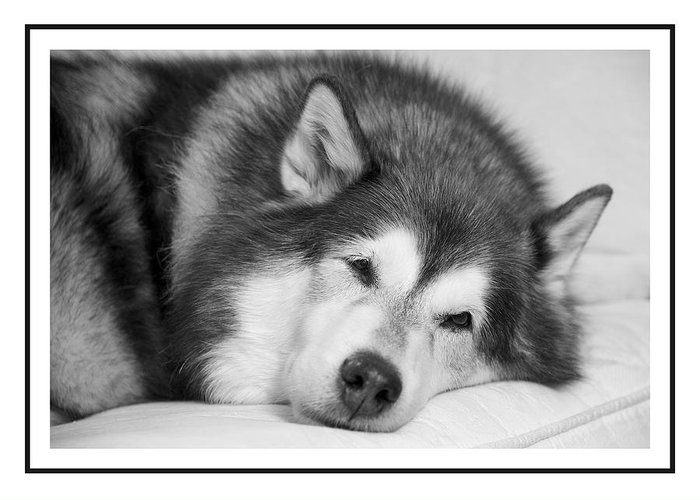 Dog Greeting Card featuring the photograph I Am Snoozing by Petra Mayer