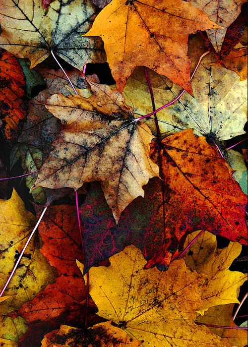 Fall Color Greeting Card featuring the photograph I Love Fall 2 by Joanne Coyle