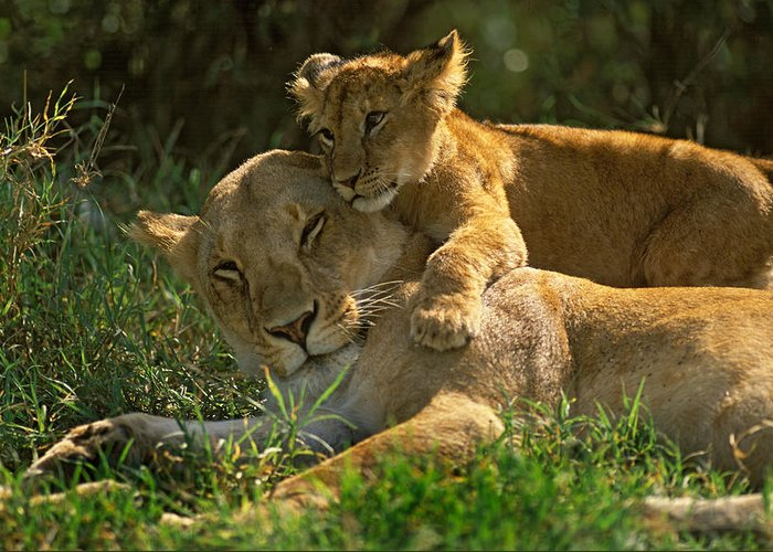 Africa Greeting Card featuring the photograph I Love My Mother by Johan Elzenga