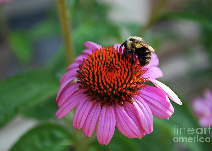Daisy Greeting Card featuring the photograph I Love Pollen And Pollen Loves Me by Lori Tambakis