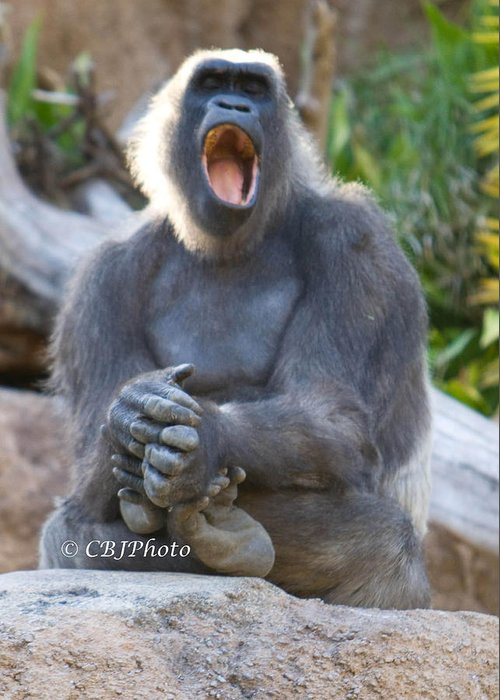 Animal Greeting Card featuring the photograph I Want To Sing..... by Carl Jackson