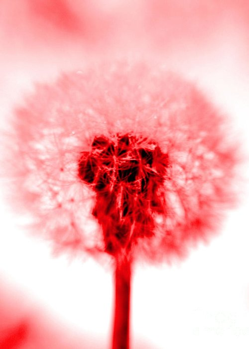 Dandelion Greeting Card featuring the photograph I Wish In Red by Valerie Fuqua