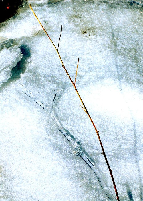 Nature Greeting Card featuring the photograph Ice Shadow by Lisa Kane