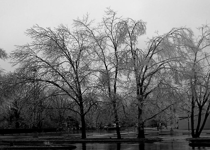 Trees Greeting Card featuring the photograph Ice Trees by Audrey Venute