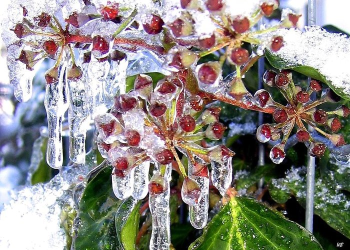 Iced Ivy Greeting Card featuring the photograph Iced Ivy by Will Borden