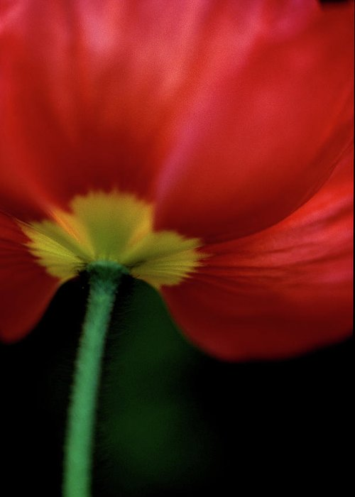Poppies Greeting Card featuring the photograph Iceland On Black by Kathy Yates