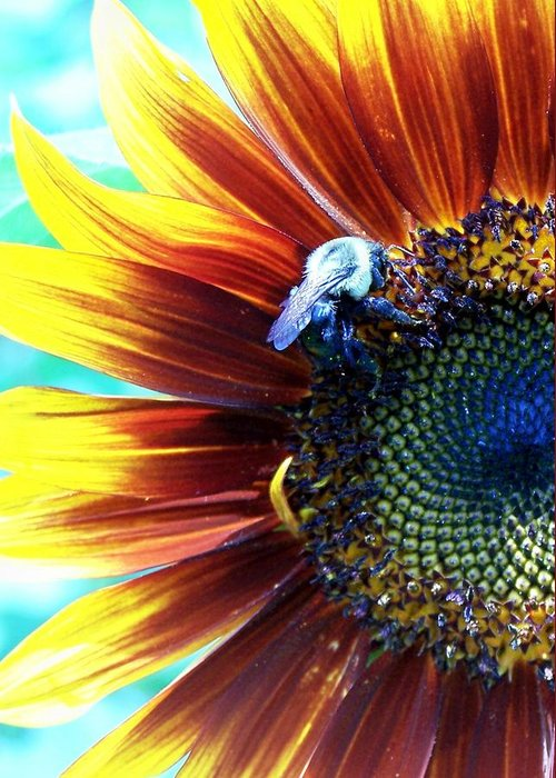 Bees Greeting Card featuring the photograph I'll Bee There by Vijay Sharon Govender