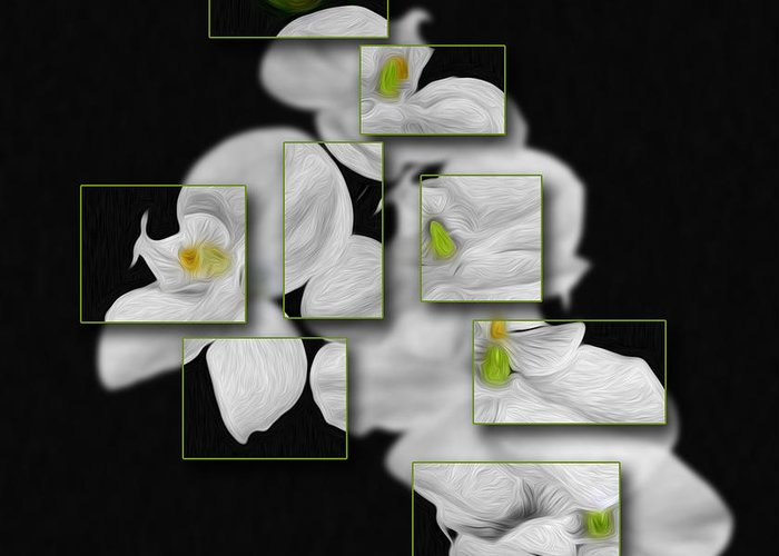 Flower Greeting Card featuring the photograph In And Out Of Focus 2 by Cecil Fuselier