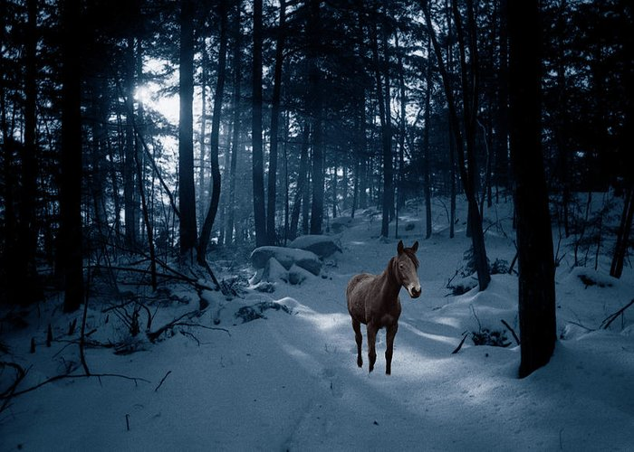 Horse Greeting Card featuring the photograph In Blue Wood by Wayne King