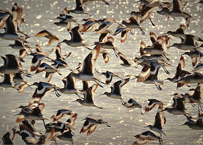 Birds Greeting Card featuring the photograph In Flight by Paul Causie