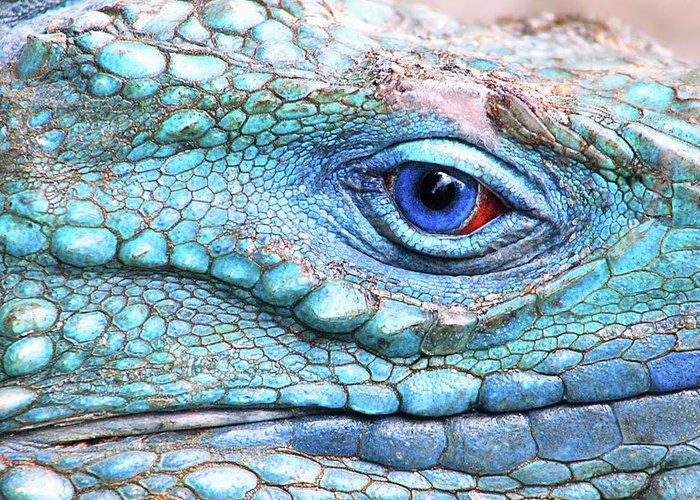Iguana Greeting Cards