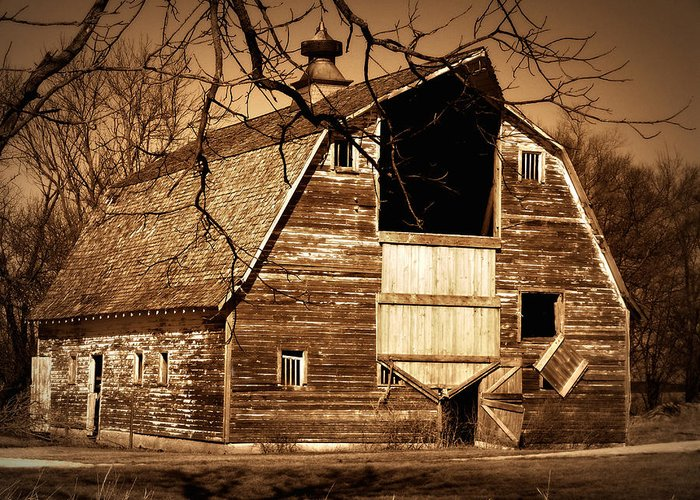 Barn Greeting Card featuring the photograph In Need by Julie Hamilton