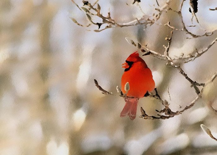 Cardinal Greeting Card featuring the photograph In Red by Gaby Swanson