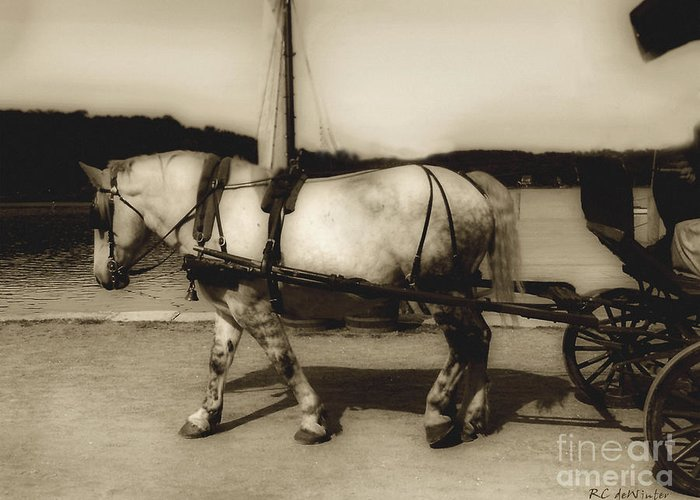 Horse Greeting Card featuring the photograph In The Cool Of The Evening by RC DeWinter