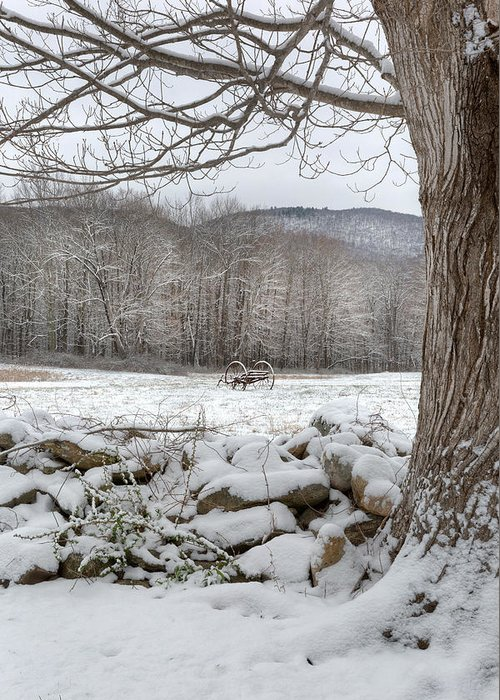 Winter Greeting Card featuring the photograph In The Field by Bill Wakeley