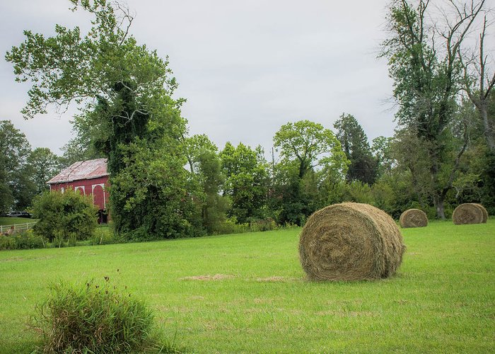 Haybales Greeting Card featuring the photograph In The Hayfield by Greg Sommer