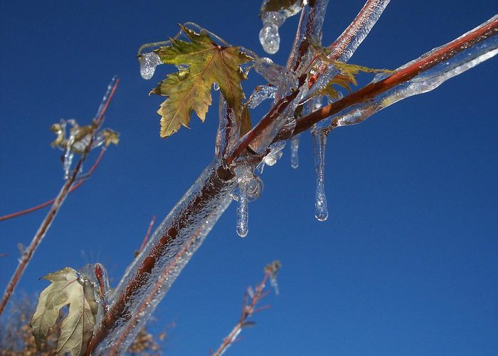 Sky Blue Ice Leaves Greeting Card featuring the photograph In The Ice by Michael Parsons