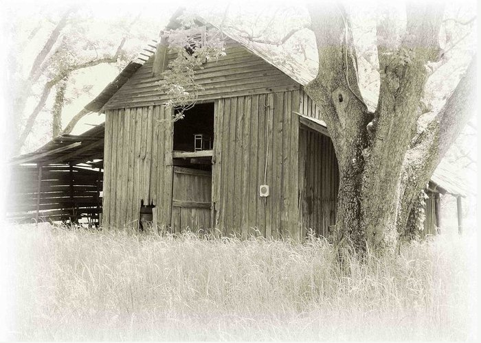 Barn Greeting Card featuring the photograph In The Pecan Orchard by Nelson Strong