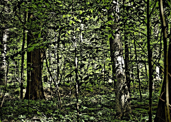 Landscape Greeting Card featuring the photograph In The Woods Wc by David Lane