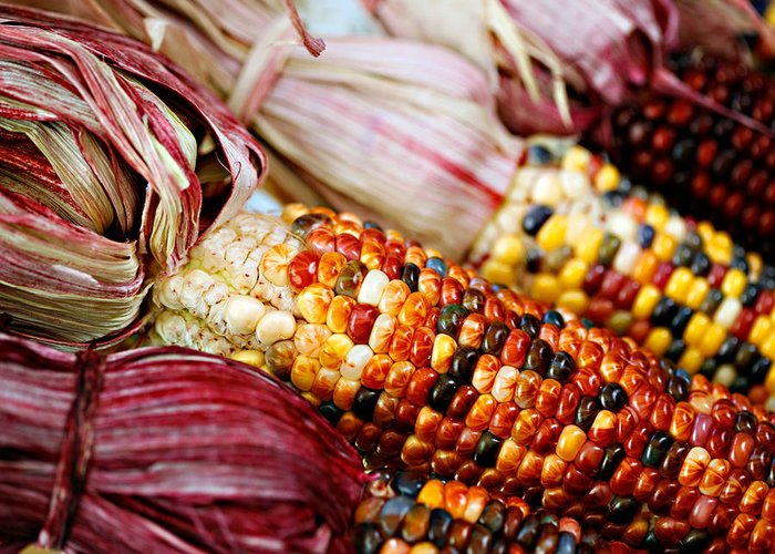 Corn Greeting Card featuring the photograph Indian Corn by Marilyn Hunt