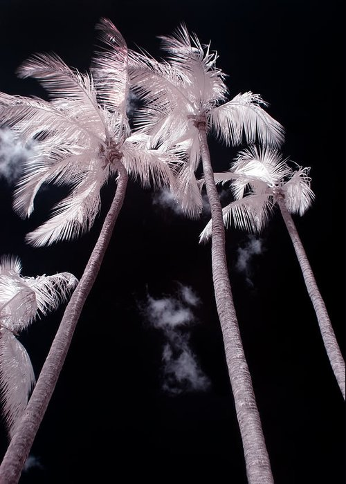 3scape Photos Greeting Card featuring the photograph Infrared Palm Trees by Adam Romanowicz