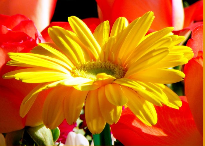 Floral Greeting Card featuring the photograph Inner Glow by Karen Wiles