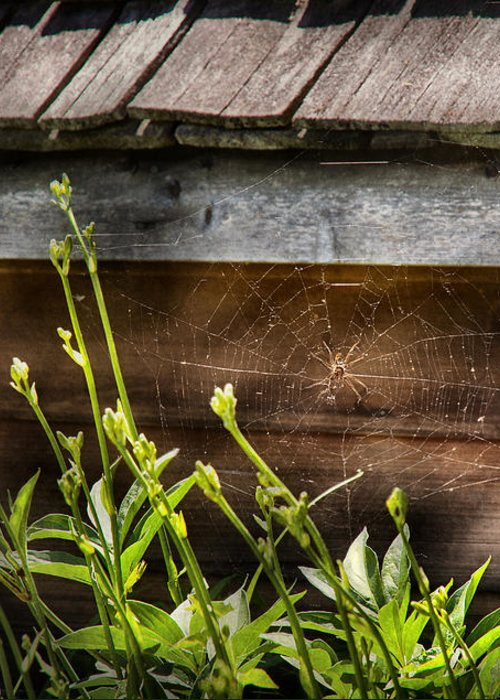 Suburbanscenes Greeting Card featuring the photograph Insect - Spider - Charlottes Web by Mike Savad