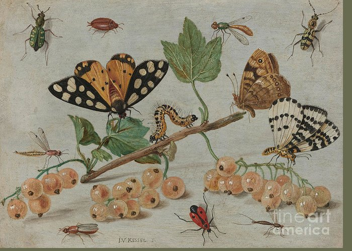 Flemish Greeting Card featuring the painting Insects And Fruit, by Jan Van Kessel