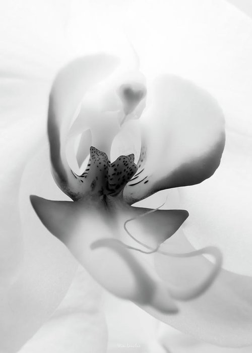 White Orchid Greeting Card featuring the photograph Inside Orchid by Wim Lanclus