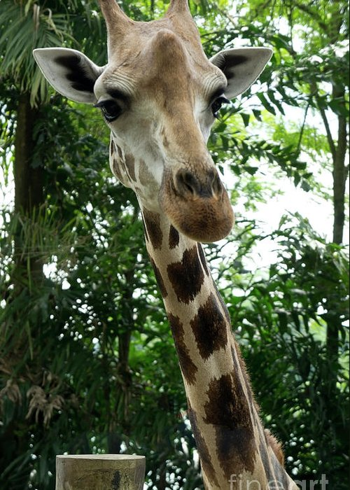Giraffe Greeting Card featuring the photograph Inspector Giraffe by Marie Loh