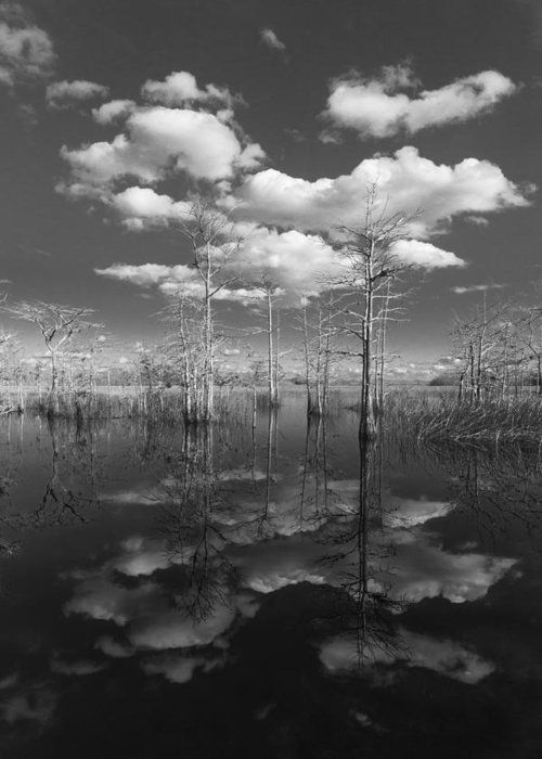 Clouds Greeting Card featuring the photograph Into The Everglades by Debra and Dave Vanderlaan